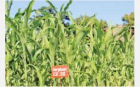 crop-garden