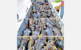 drivers-arrested-under-the-prevention-of-cruelty-to-animals-act