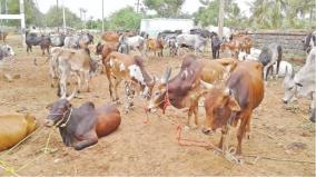 the-tamil-nadu-animal-husbandry-shepherd-welfare-rights-federation-has-demanded-that-the-tamil-nadu-government-immediately-set-up-a-livestock-pastoral-welfare-board