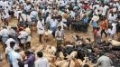 nellai-cattle-shandy-stopped