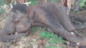 elephant-dies-in-western-ghats