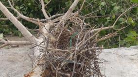 smart-city-works-hinders-lives-of-birds