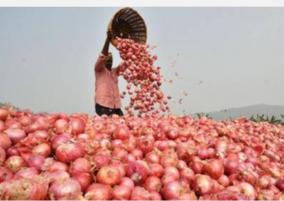 moderate-onion-prices