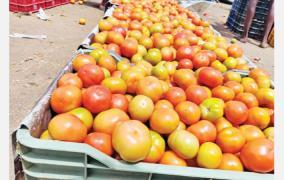 inexpensive-tomatoes