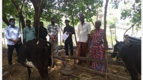 rs-5-000-per-goat-insurance-up-to-rs-30-000-per-cow-central-government-veterinary-insurance-camp-at-nagai