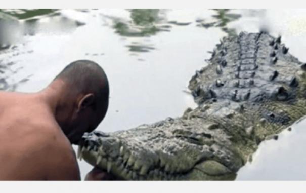 vegetarian-crocodile