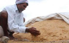 government-agrees-to-procure-paddy-with-17-wetness