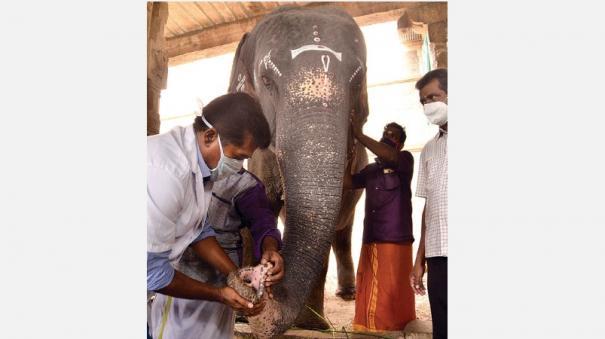 elephant-gandhimathi