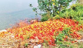 tomato-sales-down
