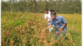 rainfed-cashew-production-doubles-in-hosur-due-to-southwest-monsoon-farmers-happy
