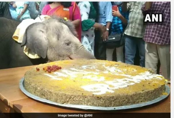 happy-birthday-sreekutty-baby-elephant-in-kerala-celebrates-her-first-birthday