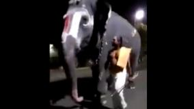 the-temple-elephant-talking-to-the-pagan-miracle-at-srirangam-temple-viral-video