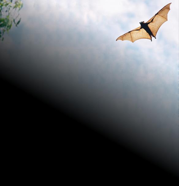 bats-and-virus