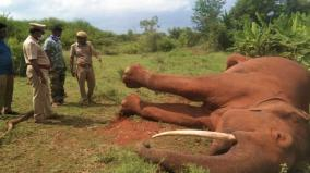 elephant-died-in-covai