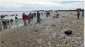shellfish-on-the-beach-near-cuddalore-the-public-gave-away