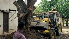 tree-damage-in-puduchery