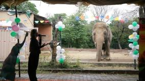 world-s-loneliest-elephant-kaavan-starts-trip-to-cambodia