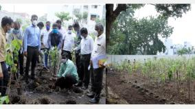 miyawaki-dense-1650-saplings-were-planted-in-1650-square-feet-in-kk-nagar-chennai-corporation-commissioner-prakash-study