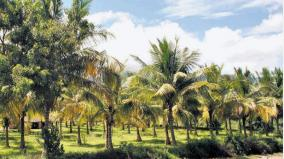 nellai-district-administration-gives-advice-to-safeguard-coconut-trees