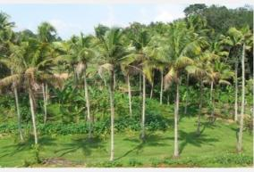 rapid-coconut-root-disease-in-kerala-increased-vulnerability-in-border-tamil-nadu-districts