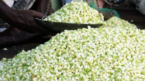 madurai-jasmine-prices-fall-again-farmers-are-concerned