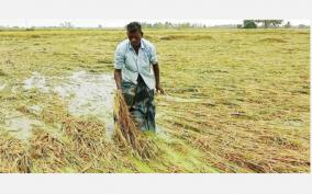 300-acres-of-paddy-fields