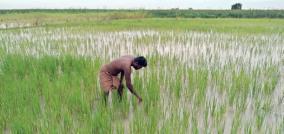 crops-sank