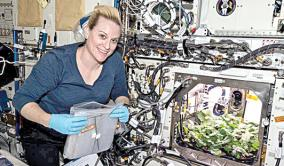 raddish-cultivation-in-international-space-station