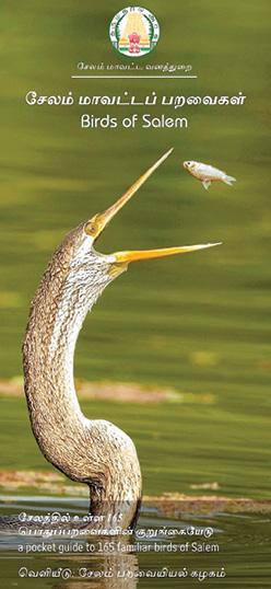 salem-birds