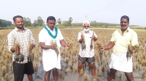 puduchery-farmers-affected-due-to-rain