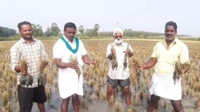 puduchery-farmers-affected-due-to-rain