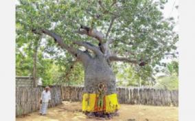 ponthanpuli-trees