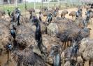 emu-bird-business-fraud-case-judgement