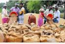 paddy-procurement-center-in-3-villages-in-pudukkottai-district-high-court-orders-to-open-in-2-weeks