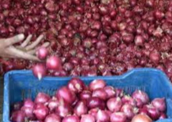 import-of-onions