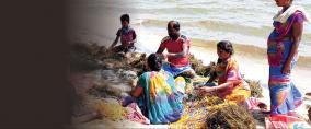 tamil-nadu-coastal-areas
