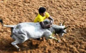 jallikattu-restrictions-bull-tamers-and-fighters-express-anguish