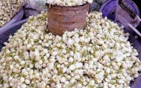 dindigul-jasmine-price-soars-high