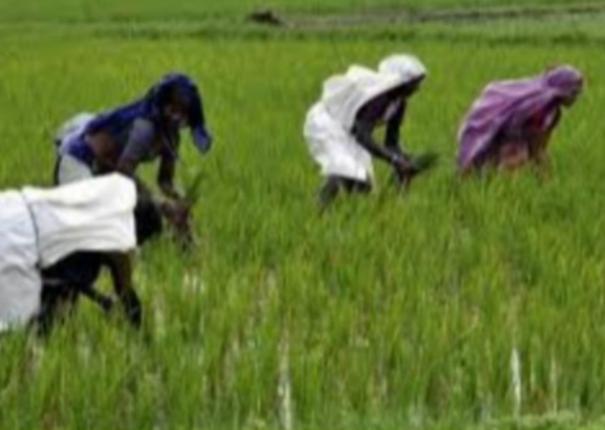 agriculture-farmer-welfare