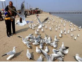 government-confirms-bird-flu-cases-in-rajasthan-madhya-pradesh-himachal-pradesh-kerala