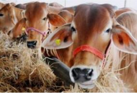 government-to-hold-national-voluntary-online-exam-on-cow-science-on-february-25-rashtriya-kamdhenu-aayog