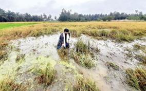 continuous-rains-cause-damaged-to-crops