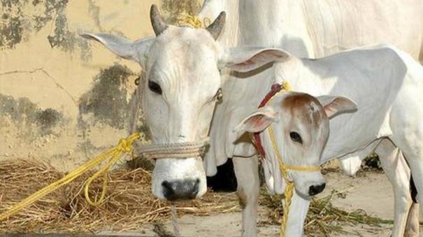 cow-science-exam