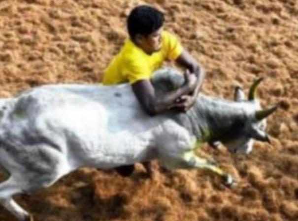 phsiotherapy-doctors-demand-to-tn-government-on-jallikattu
