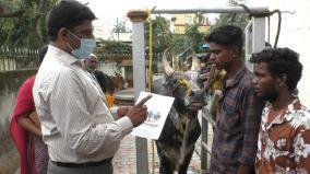avyaniyapuram-jallikattu-bulls-given-token