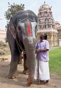 srirangan-elephant-andal
