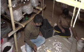 j-k-udhampur-engineer-takes-up-mushroom-farming-after-job-loss-due-to-covid