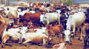 cow-slaughter-act