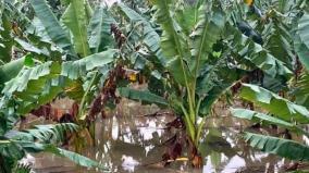 heavy-rains-continue-to-clash-nellai