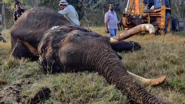 masinagudi-elephant-dies-of-wound